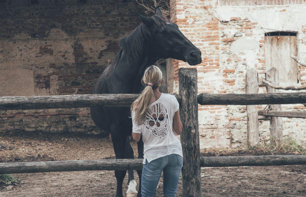 biohansa-horse-2